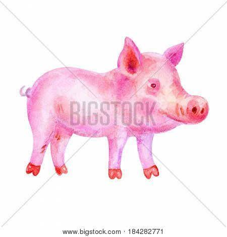 Cute Watercolor colorful pink piggy illustrations isolated on white background. Hand drawn vintage piggy and retro design.
