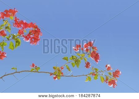 Santa Rita Flowers Against Blue Sky