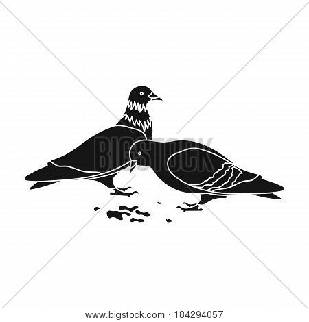 Pigeon.Old age single icon in black style vector symbol stock illustration .