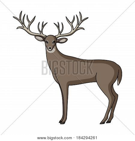 Deer with big horns.Animals single icon in cartoon style vector symbol stock illustration .
