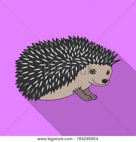 Hedgehog.Animals single icon in flat style vector symbol stock illustration .