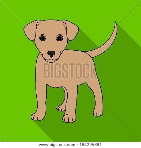 Puppy labrador.Animals single icon in flat style vector symbol stock illustration .