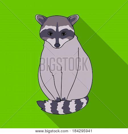 Raccoon.Animals single icon in flat style vector symbol stock illustration .