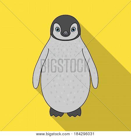 Penguin.Animals single icon in flat style vector symbol stock illustration .