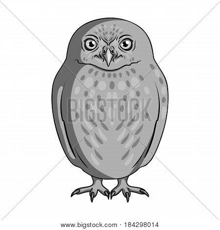 Owl.Animals single icon in monochrome style vector symbol stock illustration .
