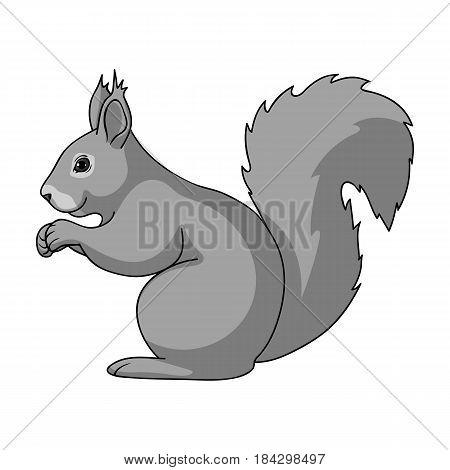 Squirrel.Animals single icon in monochrome style vector symbol stock illustration .