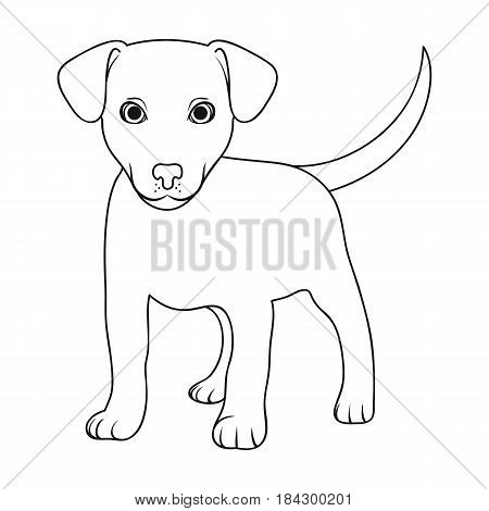 Puppy labrador.Animals single icon in outline style vector symbol stock illustration .