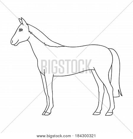 Horse.Animals single icon in outline style vector symbol stock illustration .