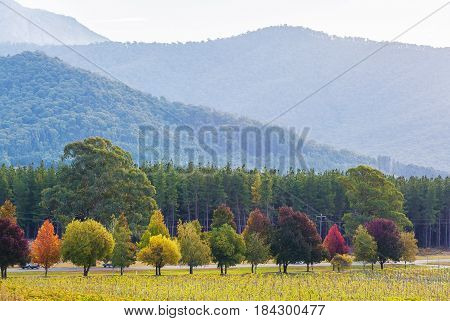 Fall In Australia - Green, Yellow, Red, And Orange Trees