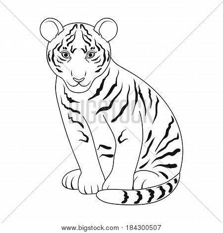 Young tiger.Animals single icon in outline style vector symbol stock illustration .