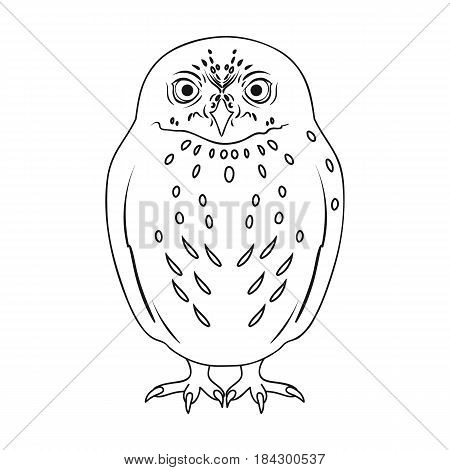 Owl.Animals single icon in outline style vector symbol stock illustration .