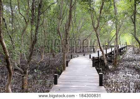 natural background of tree with sunshine bottom up view of trees in Forest Tung Prong Thong Golden Mangrove Field at Rayong province Thailand