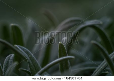 dark super macro green leaves or grass texture