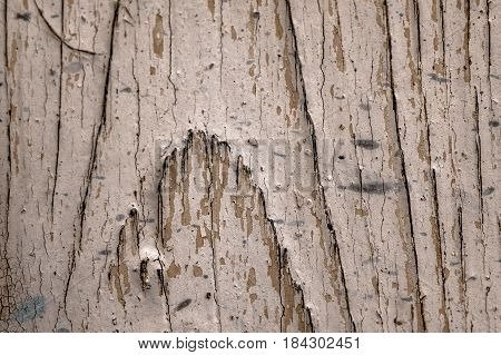 old black brown and white wooden background with knots texture severed tree