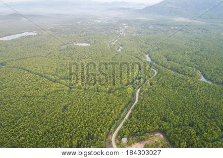 Top view road in the green mangrove forest at Phang-Nga bay southern of Thailand. Aerial view from flying drone