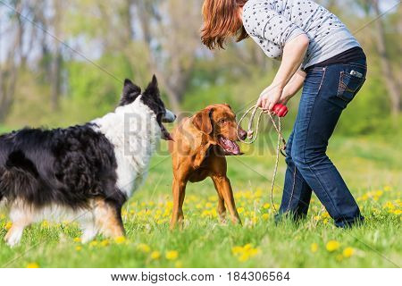 Woman Plays With Two Dogs On The Meadow