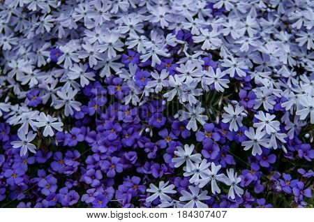 Blue flowers seamless background pattern. High resolution