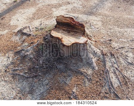 The Photo of stump of the tree