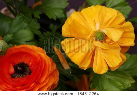 Top view of Yellow and orange Buttercup or Ranunculus flowers selective focus