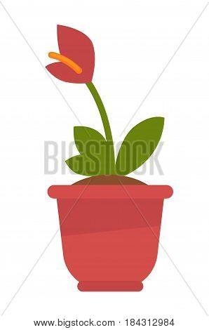 Calla flower in flowerpot isolated on white vector picture. Colorful domestic live decorative element with ruddy petals, green leaves and long stem in red pot. Blooming template illustration