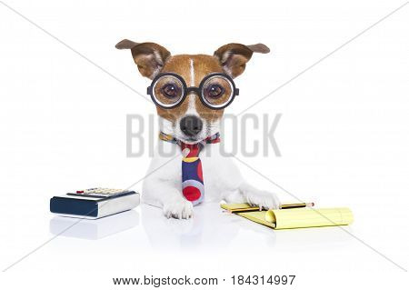 jack russell secretary accountant dog with calculator a note pad and pencil beside isolated on white background
