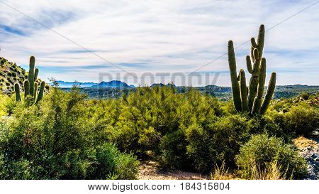 Large Saguaro Cactus and mountains in the desert landscape along the Bartlett Dam Road in Tonto National Forest in Maricopa County, Arizona, USA
