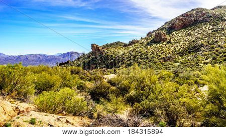 The desert landscape with its many Saguaro cactuses and other cacti and shrubs along the Bartlett Dam Road in Tonto National Forest in Maricopa County Arizona USA