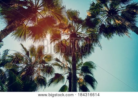 Coconut Palm Tree And Blue Sky With Vintage Filter.