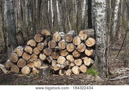 Stack of wood in a forest close up shot