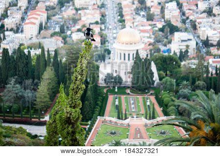 the Bahai World Center in Haifa, Israel