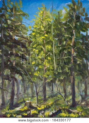 Original oil painting on canvas. Beautiful forest landscape. Modern impressionism art. - Modern impressionism painting.
