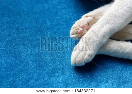 close up of cat's paw, copy space