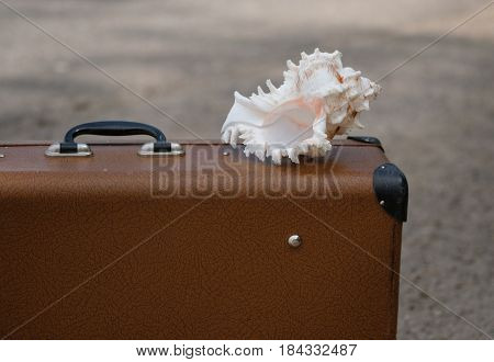 Vintage brown suitcase and a big seashell on it