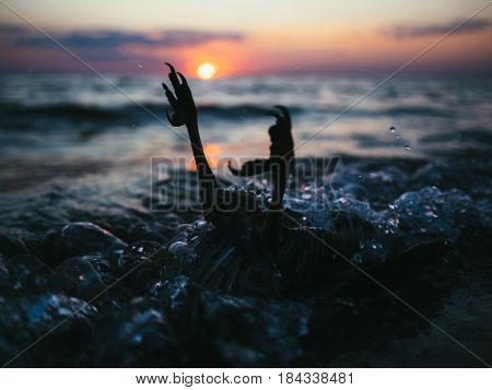 Sad picture - dead bird laying in waves of deep sea on the background with beautiful sunset