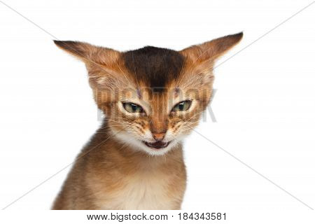 Portrait of Angry Kitten, Looks like hater on Isolated White Background