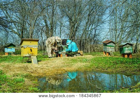 Three beekeepers work on an apiary at hive clean hives with bees. Sunny day In the Kostroma district Russia on May 1 2017