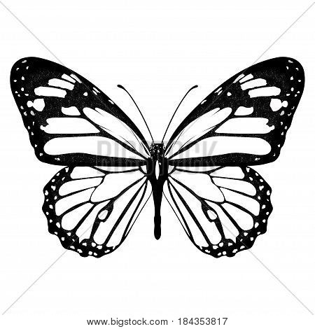 Butterfly Black And White, View From Above, Isolated On White Background, Vector Insect, Monochrome