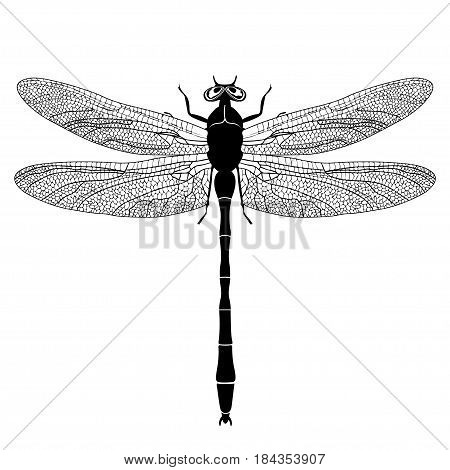 Dragonfly View From Above, Black And White Monochrome Illustration, Isolated On White Background, Ve