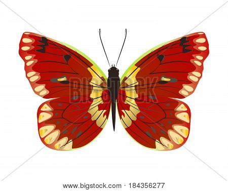 Isolated beautiful butterfly on white background. Red and yellow colors.