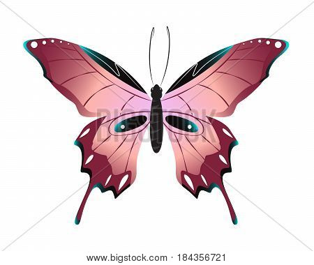 Isolated beautiful butterfly on white background. Pink colors.