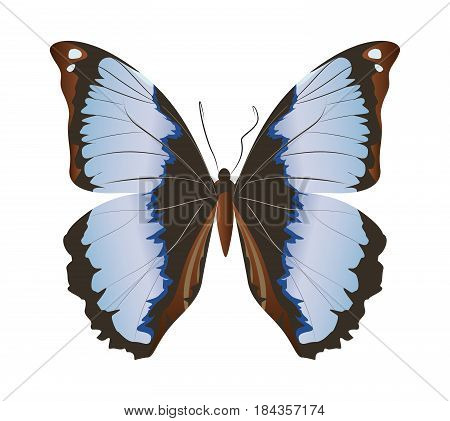 Isolated beautiful butterfly on white background. Grey and black colors.