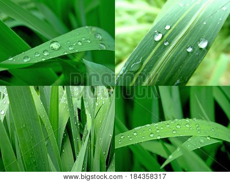 photography with scene of the kit herbal background with drop of water