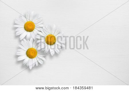 Three chamomile flowers on white wooden background