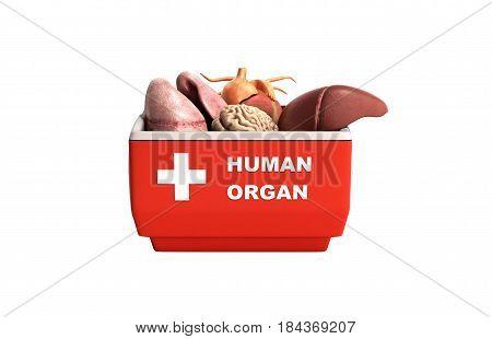 Organ Transportation Concept Open Human Organ Refrigerator Box Red 3D Render No Shadow Background