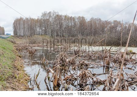 Swamp. The Swamp In The Wood. Dry Reservoir. Zasushlevy Time.