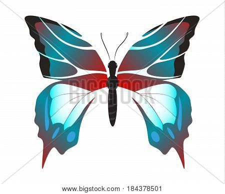 Isolated beautiful butterfly on white background. Blue and red colors.