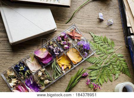 Blossom flower decorative tenderness fresh