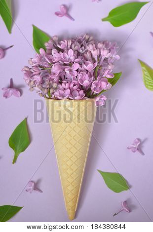 lilac in cone on paper background
