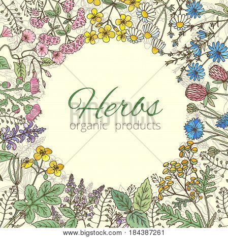 Medicinal, botanical and healing beauty herbs from garden. Background vector illustration. Banner template with herb and flower, poster with nature botanical herbs