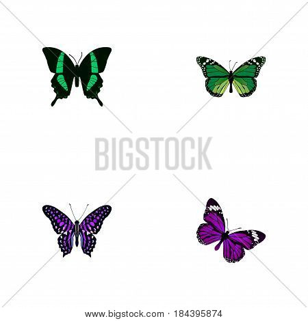 Realistic Butterfly, Polyommatus Icarus, Beauty Fly And Other Vector Elements. Set Of Beauty Realistic Symbols Also Includes Purple, Tropical, Malachite Objects.